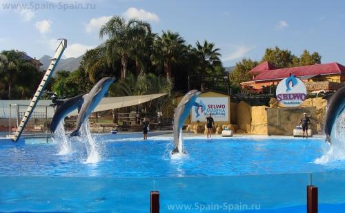 Дельфинарий Selwo Marina в Бенальмадене