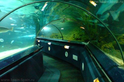 Аквариум морских обитателей Sea Life